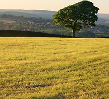 Lone Tree by fotohebden