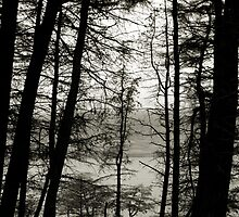 Black and White Trees by fotohebden