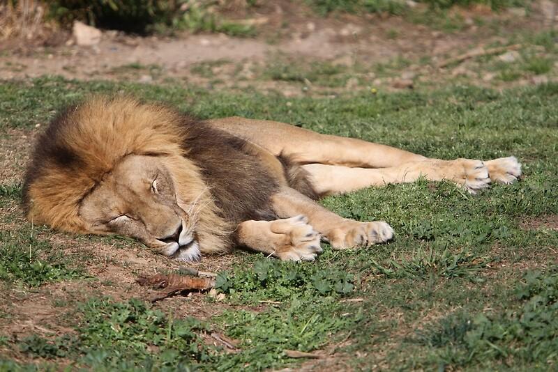 zoo nykøbing f gratis amatør sex