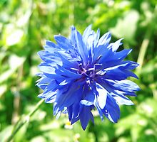 Blue flower in spring by Brevis