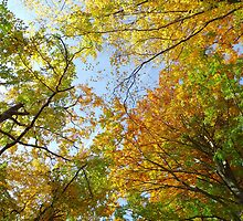 Treetops in autumn by Brevis