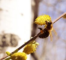 Honey Bee Gathering Nectar by rhamm