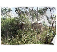 Fence Overtaken By Weeds and Trees Poster