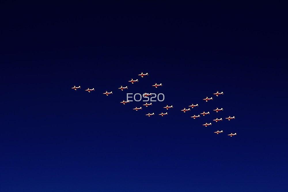 RAAF PC-9 Thunderbird Formation by EOS20