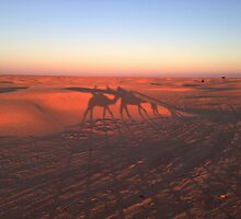Sahara - Lights and Shadows at Sunset Time by Marco Canepa