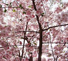 alot of cherryblossoms by Brevis