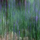Bluebell Woods by Maureen Anderson