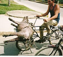 Pig on a Bicycle by Arthur  Chin Yet