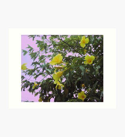 Jamaican Buttercups Art Print