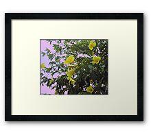 Jamaican Buttercups Framed Print