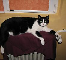 What's Wrong I'm Only Keeping the Radiator Warm by Dennis Melling
