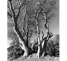 Ravensheugh Beeches Photographic Print