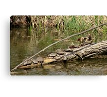 Community Log  Canvas Print
