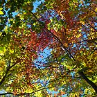 Canopy colour - 2013 by Joseph Rotindo