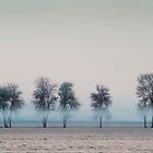 Frosty Morning by Yih-Tai  Chen
