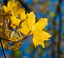 yellow leaf by shottop