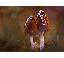 Inkcap mushrooms Photographic Print