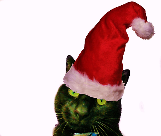 Christmas Cattitude by Ladymoose