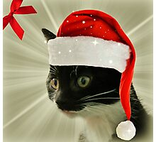 The Glory of the Christmas Kittens Photographic Print