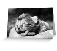 Baby kitten in hand Greeting Card