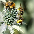 Bumblebee and two wasps by flashcompact