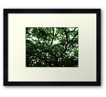 Greenery Web Artistic Photograph by Shannon Sears Framed Print