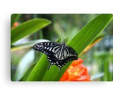Striking Butterfly Canvas Print
