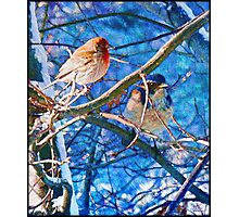Finch And Blue Jay - California Winter Day Photographic Print