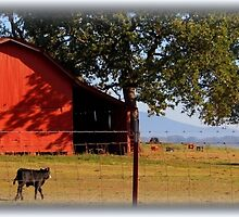 Tranquil Morn by Betty Northcutt