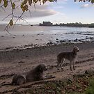 jamie an millie at blackness beach by joak