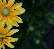 flowers to brighten your day by LauraBalducci