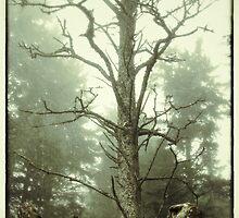 Mist and Mystique by ekimap