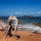 Shipwreck Beach .2 by Alex Preiss