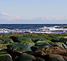 Reef Bay Winter Beauty by TerrillWelch