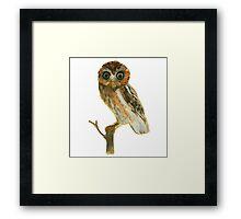Elf Owl Framed Print
