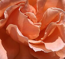 flower-centre-orange-rose by Joy Watson