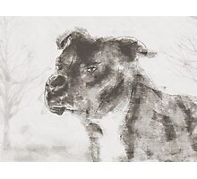 Pitbull Dog Illustration Photographic Print