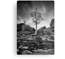 Boab on a Hill Metal Print
