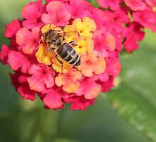 Bee by Johnoxleysphoto
