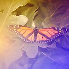 Orange butterfly by jb08067