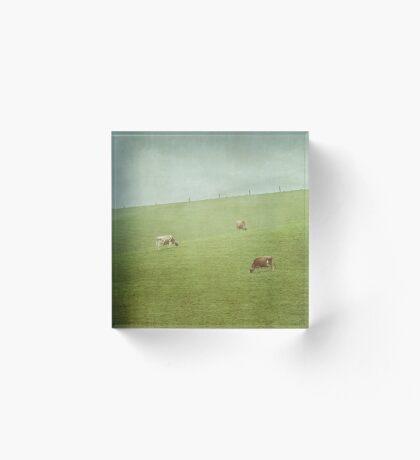 Grazing cows Acrylic Block