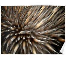 Echidna spines Poster