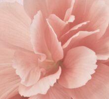 Peach Begonia Fringed Petals Sticker