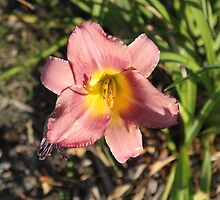 Wilting Beauty by Vicki Childs