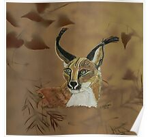 African Caracal. Poster