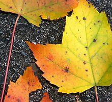 Leaves on asphalt - 2009 by Joseph Rotindo