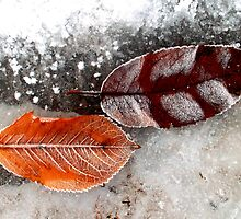 Frozen Leaves by ©The Creative  Minds