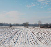 Snowy Field by jojobob