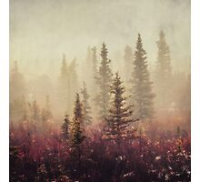Wander in the Fog Photographic Print