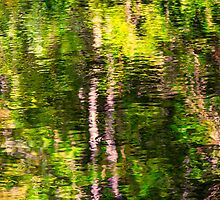 Fall reflections in the Harz National Park by Bernd F. Laeschke